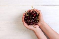 Handful of cherries in female hands Royalty Free Stock Image