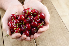 Handful of cherries Royalty Free Stock Photography