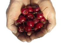 Handful cherries in rough Men hands Stock Photos