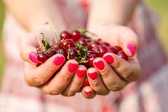 Handful of cherries Stock Photos