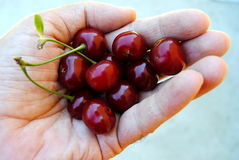 Handful of cherry. Some red cherry-picked for your loved on Stock Image