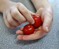A Handful of Cherry Tomatoes. Stock Photo
