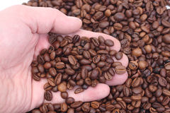 Handful of coffee. Male hands holding coffee beans Royalty Free Stock Photos