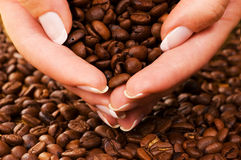 Handful of coffee beans Royalty Free Stock Images