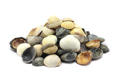 A handful of colorful seashells Royalty Free Stock Image