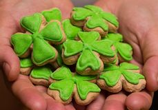 Handful of cookies clover leaf green mastic in hands close-up treats feast Saint Patrick stock photo