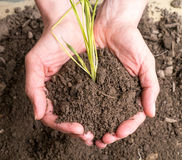 Handful of Dirt Royalty Free Stock Image