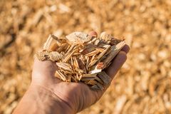 A handful of dry technological wood chips. Selective focus Stock Photography