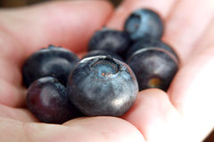 Handful of Fresh Blueberries Stock Images
