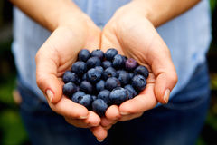 Handful of fresh blueberries Stock Image