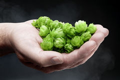 Handful of fresh hops Stock Photography