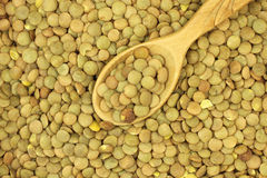 A handful of grain lentils in a wooden spoon Stock Image