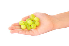 Handful of grapes Stock Photography