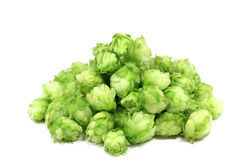 A handful of green hop cones Stock Images