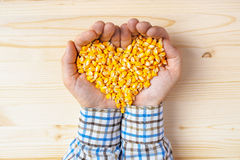 Handful of harvested corn seed heart shaped pile, top view Stock Photos
