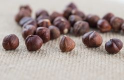 Handful of hazelnuts on a burlap fabric. Selective focus on the front row of nuts. stock image