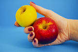 Handful of health, female hand holding apples. Female hand holding two healhty apples Stock Image