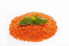 Handful of lentils and basil.  royalty free stock photo