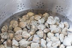 handful of & x22;lupine& x22; type clams ready to be cooked. fresh raw cla royalty free stock photo