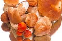 Handful of mushrooms Stock Photo