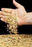 Handful oats Stock Image