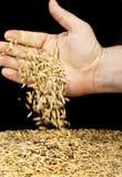 Handful oats Stock Image