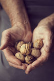 Handful Of Nuts Royalty Free Stock Photography