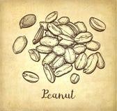 Handful of peanut. Stock Photography