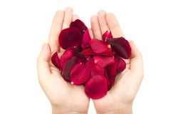 Handful of petals Stock Photography