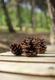 A handful of pine cones Royalty Free Stock Photo
