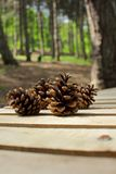 A handful of pine cones Royalty Free Stock Photography