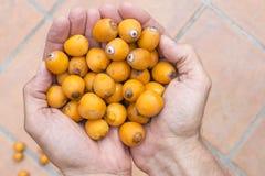 Handful of queen palm fruit Stock Image
