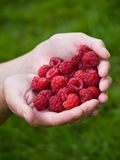 Handful raspberries Stock Photos