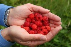 Handful of raspberries Royalty Free Stock Images