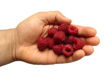 Handful of raspberries Stock Image