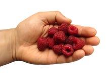 Handful of raspberries Stock Image