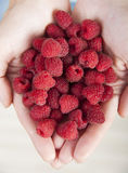Handful of raspberries Royalty Free Stock Image