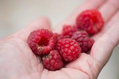 Handful of raspberry on a hand Stock Photos