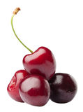 Handful of a red cherry Stock Images