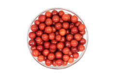 A handful of red viburnum berries in a glass Royalty Free Stock Photo