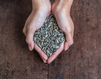 Handful of rich sunflower seeds Stock Images