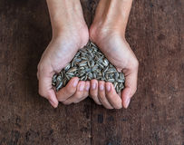 Handful of rich sunflower seeds Royalty Free Stock Photo
