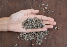 Handful of rich sunflower seeds Royalty Free Stock Image