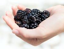 Handful of ripe blackberries in hands stock photography