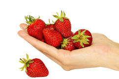 Handful of ripe strawberries Royalty Free Stock Photo