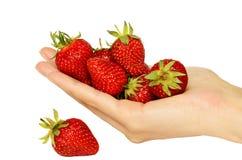 Handful of ripe strawberries Royalty Free Stock Photo