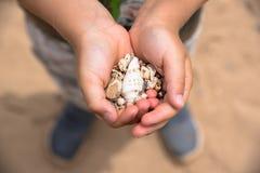 Handful of sea shells. Handful of various shape sea shells Royalty Free Stock Photography