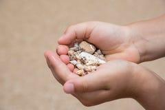 Handful of sea shells. Handful of various shape sea shells Royalty Free Stock Photos