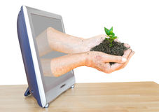 Handful of soil with sprouts leads out TV screen Stock Photos