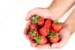 Handful of Strawberries. Handful of bright red strawberries. Isolated on white background Royalty Free Stock Photography